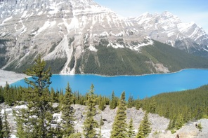 Peyto Lake is a much deeper turquoise than the other lakes along the parkway