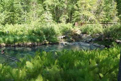The springs are surrounded by lush green ferns