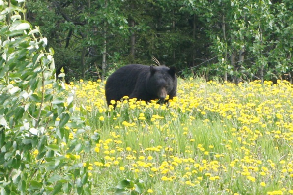 We finally saw a bear!