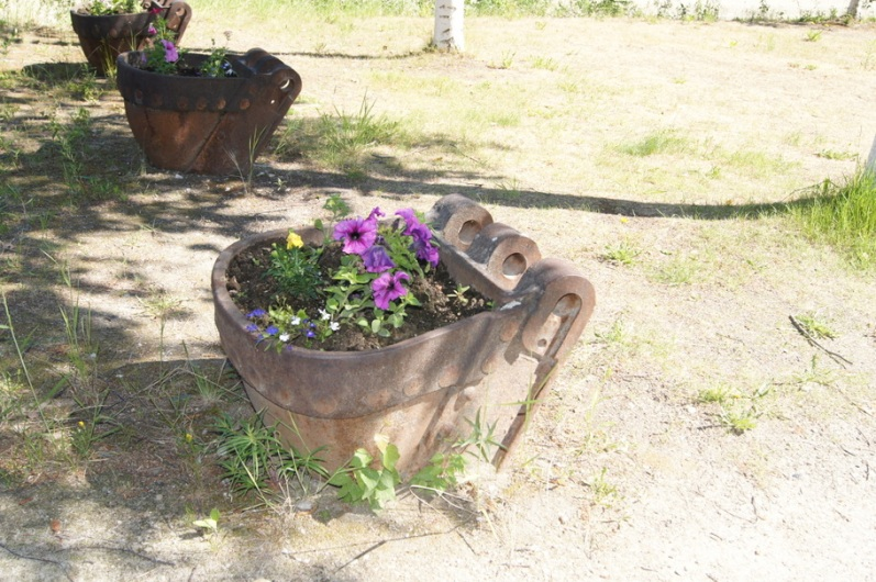 Another old bucket used as a planter