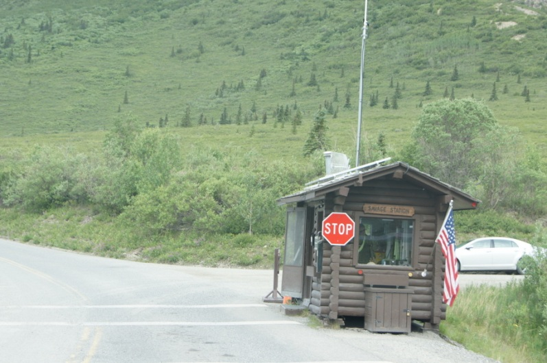 We had to stop at the checkpoint at Savage River to show our vehicle pass to get to the campground