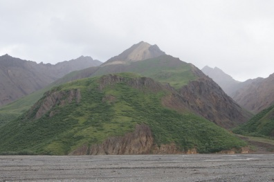 There are Dall Sheep on this mountain on the other side of Toklat River