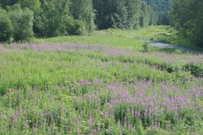 Beautiful wildflowers beside the track