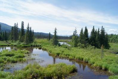 Ponds beside the train tracks