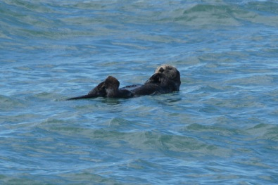 We saw sea otters all day