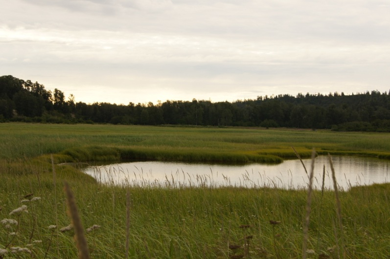 The marsh behind the campground