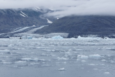 The Columbia Bay was full of ice as we approached the Columbia Glacier