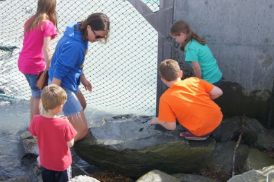 Kids trying to touch the salmon as they swim upstream to spawn. You can see fins sticking up in the water.