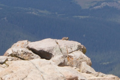 A marmot basking in the sun on top of the rock