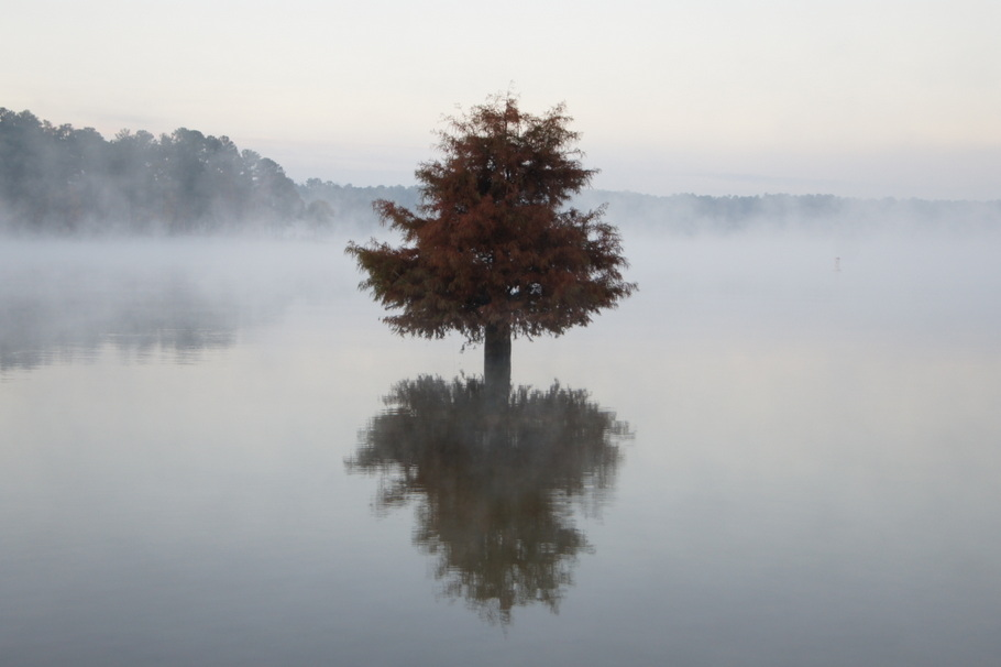 Foggy morning on West Point Lake
