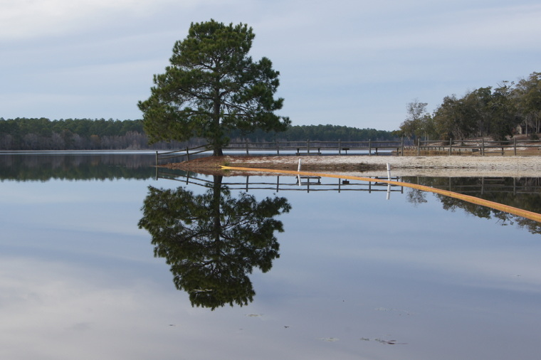 Little Ocmulgee Lake, January, 2013