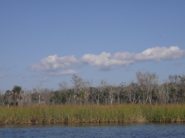 From the boat ride through Salt Springs Run, January, 2013