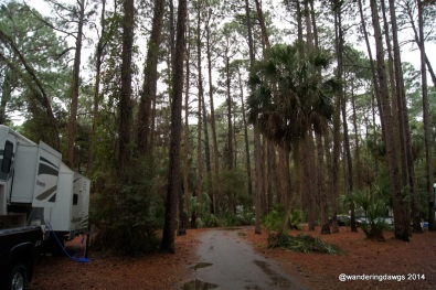 A narrow paved road winds through the campground at Hunting Island State Park, SC