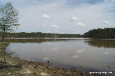 View of J Strom Thurmond Lake from Site 10 at Winfield Campground