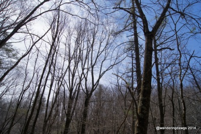 Spring trees on the Blue Ridge Parkway in Virginia