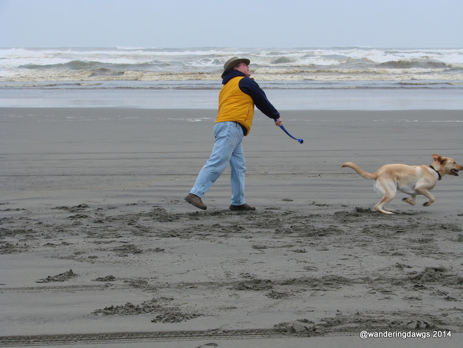 Blondie playing chuck-it on Long Beach, Washington