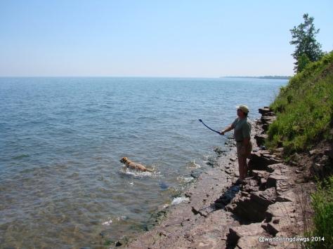 Blondie swimming in Lake Erie