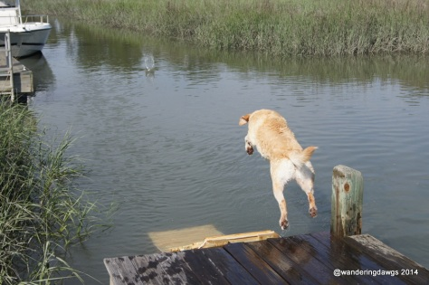Blondie dives into the creek
