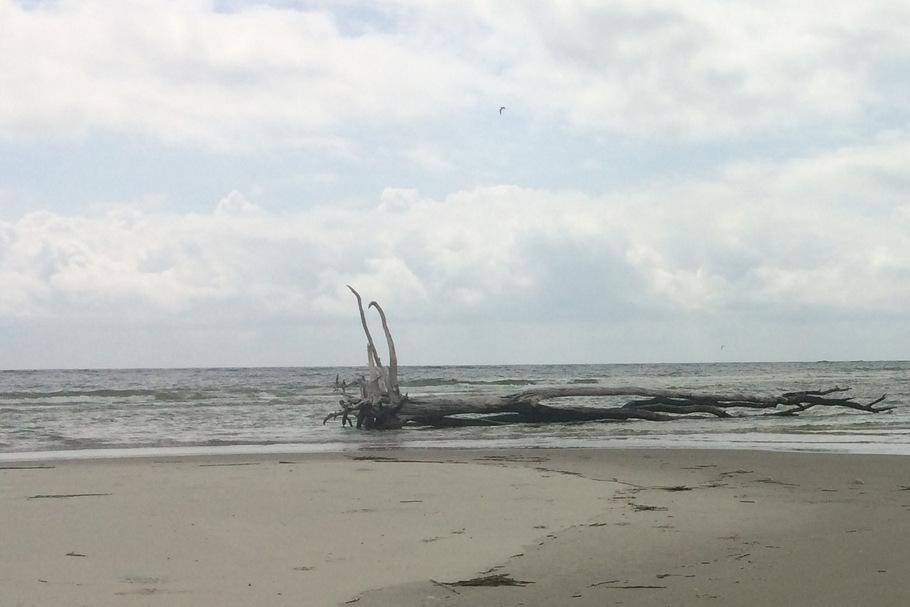 Exploring a deserted sandbar