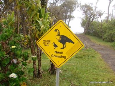 NeNe Crossing on Kauai