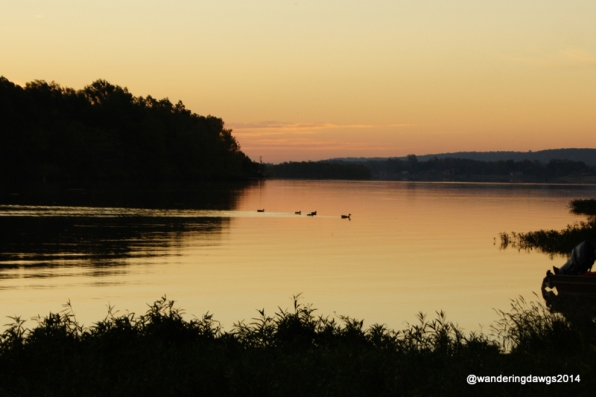 Ducks on the Arkansas river