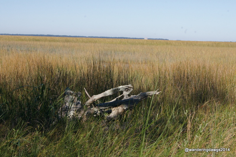 Salt Marsh of Coastal Georgia