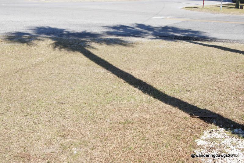 Winter Palm Tree Shadows