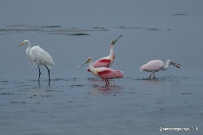 Roseate Spoonbills and Egret,Goose Island State Park