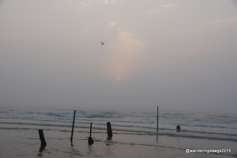 Misty morning at Mustang Island