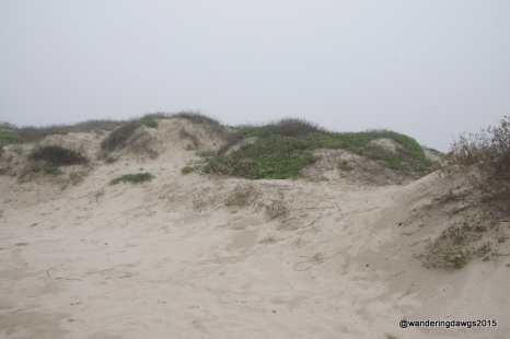 Big sand dunes at Padre Island National Seashore