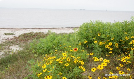 Wildflowers at Padre Island National Seashore