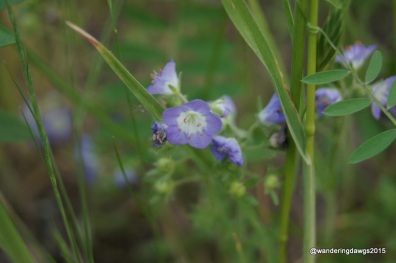 Unidentified Wildflower at Inks Lake