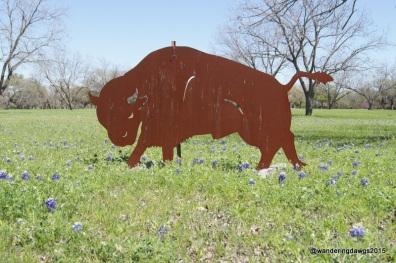 Bluebonnets on the LBJ Ranch
