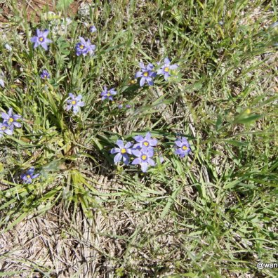 Unknown Wildflower at Lake Arrowhead
