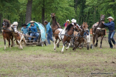 Start of a Chuck Wagon Race