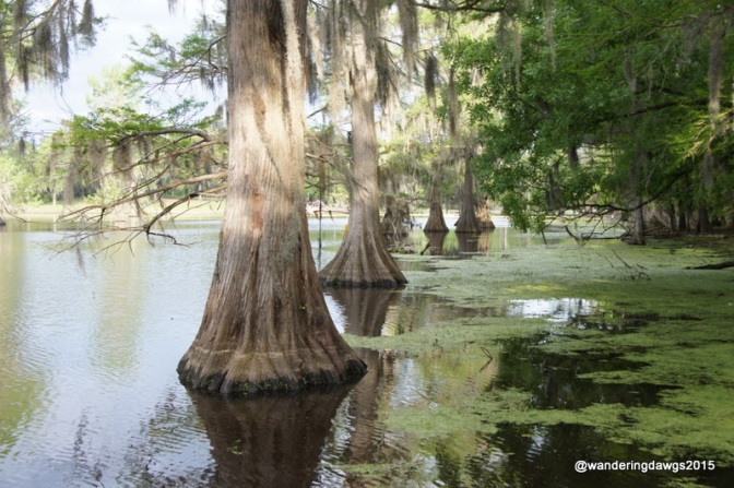 Wandering Around America One State at a Time – Louisiana