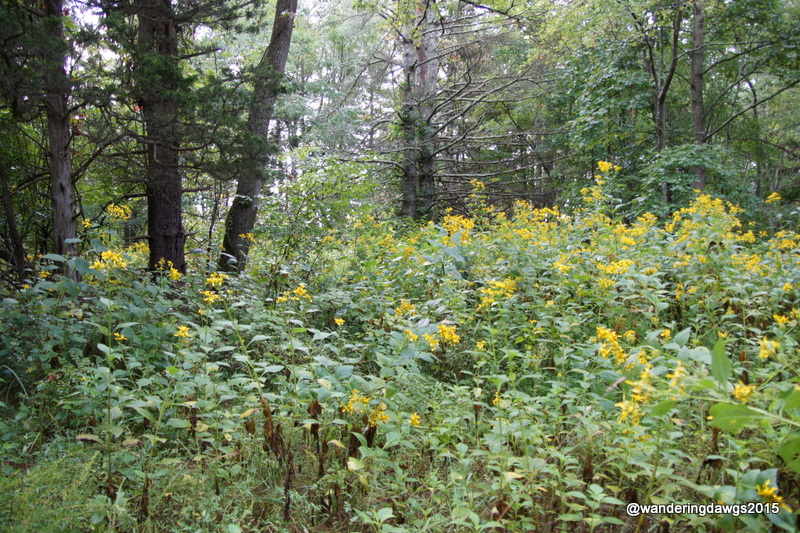Wildflowers in the woods at Claytor Lake State Park