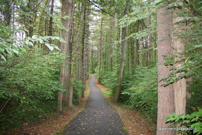 Trail at Claytor Lake State Park