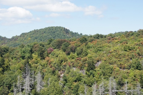A few fall colors on the Blue Ridge Parkway in NC