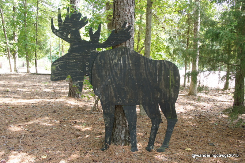 A Moose in the South Carolina Woods