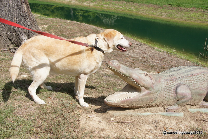 Dawg vs Gator