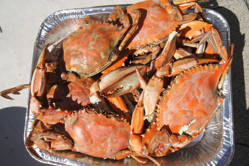 Fresh Georgia Blue Crabs Caught, Cooked, Cleaned and eaten on Halloween, 2015