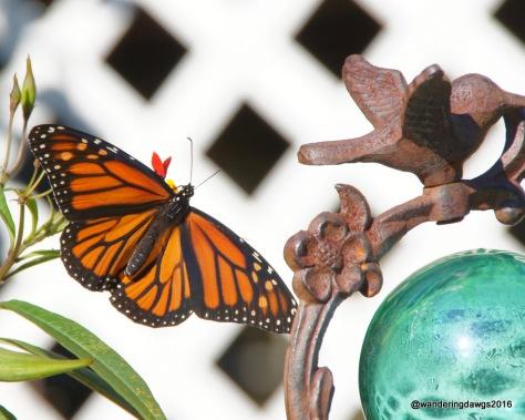 Vibrant Monarch Butterfly