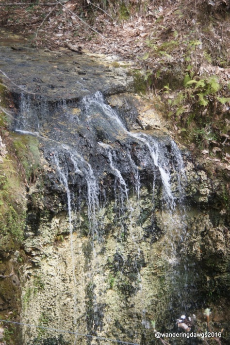 Florida's Tallest Waterfall at Falling Waters State Park