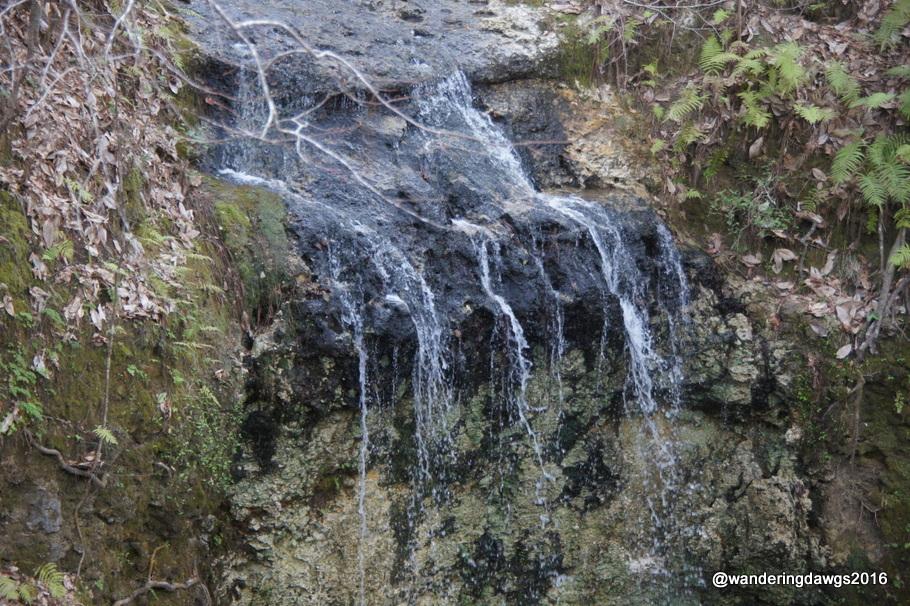 Waterfalls Wandering Dawgs