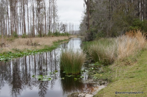 Canal leading into the Okefenokee Swamp