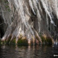 Into the Okefenokee Swamp