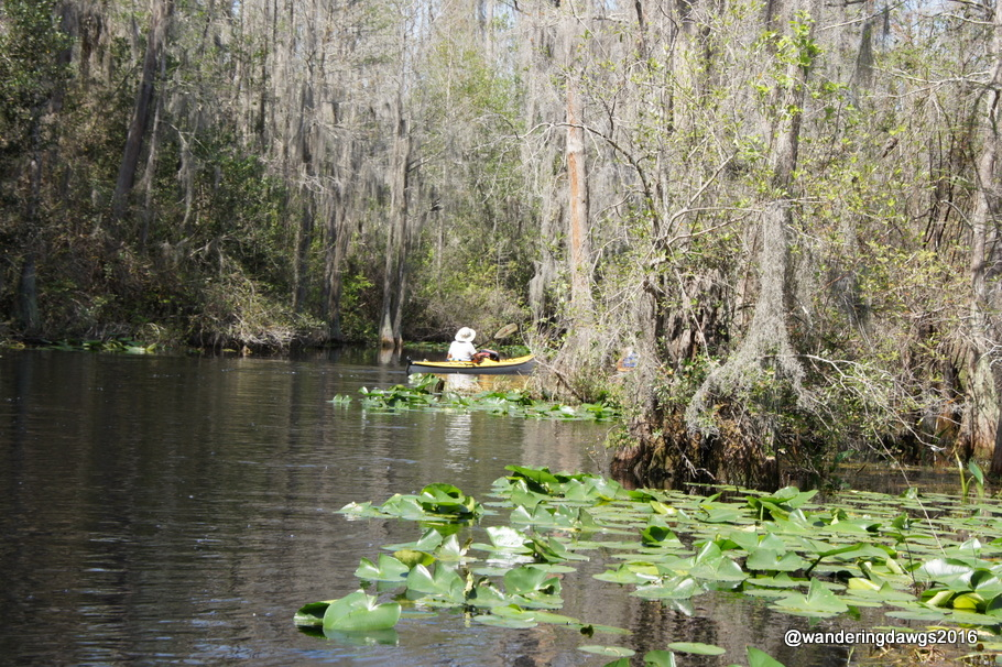 A kayaker goes around the bend deeper into the swamp