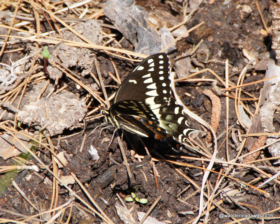 Butterfly beside the trail