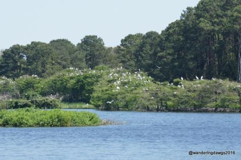 Woody Pond at Harris Neck National Wildlife Refuge